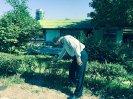 دفع آفات گل و گیاه نمک آبرود_7