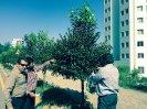 دفع آفات گل و گیاه نمک آبرود_8