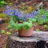 Make A Tree Stump Planter _15